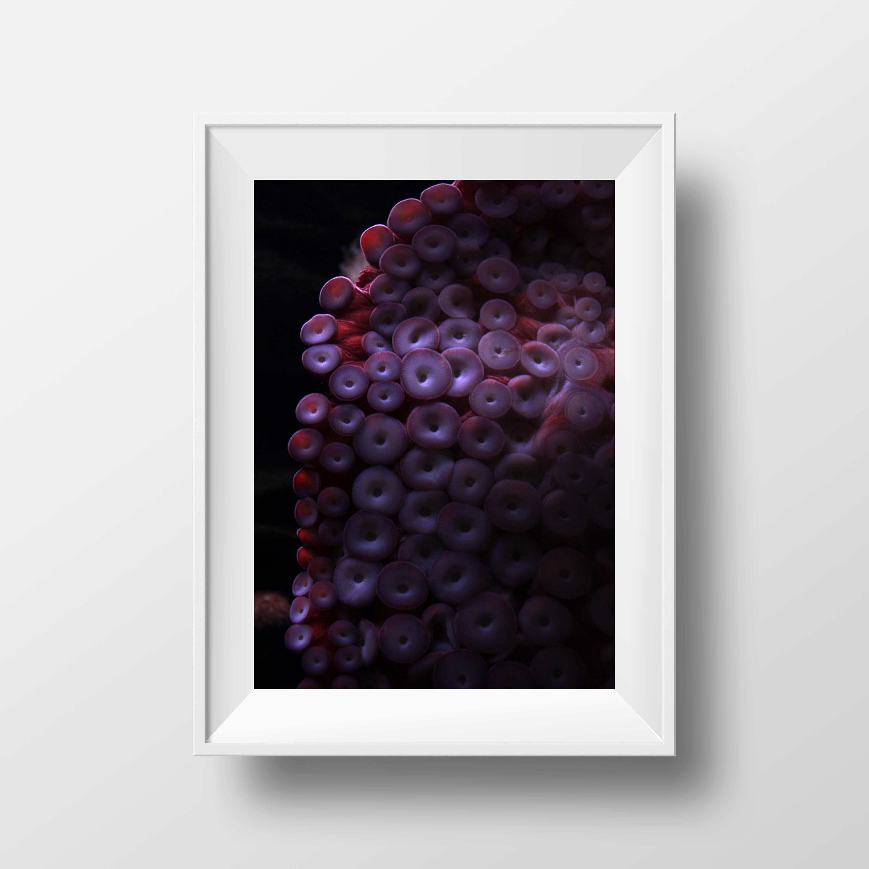 Photography ZITRO Graphic Designer